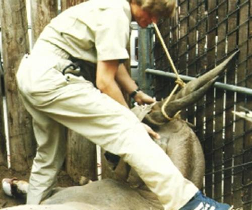 resize-Kudu wrangling Christopher Cauble