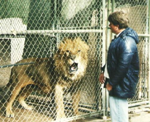 resize-Lion on fence with Chris Cauble